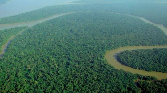 Greenpeace, l'Amazzonia divorata dagli allevamenti, causa della deforestazione